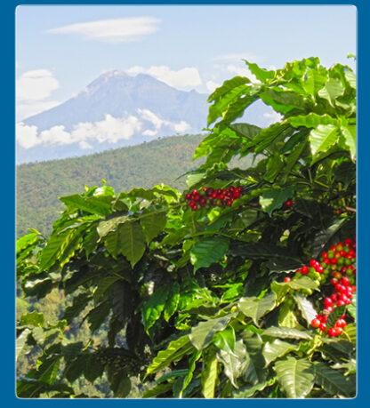 Guatemala Finca Nevada Washed Giesha Green Coffee